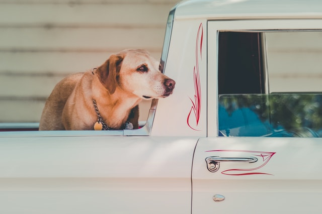 Tips on Traveling in an RV With Your Pooch (Dog)