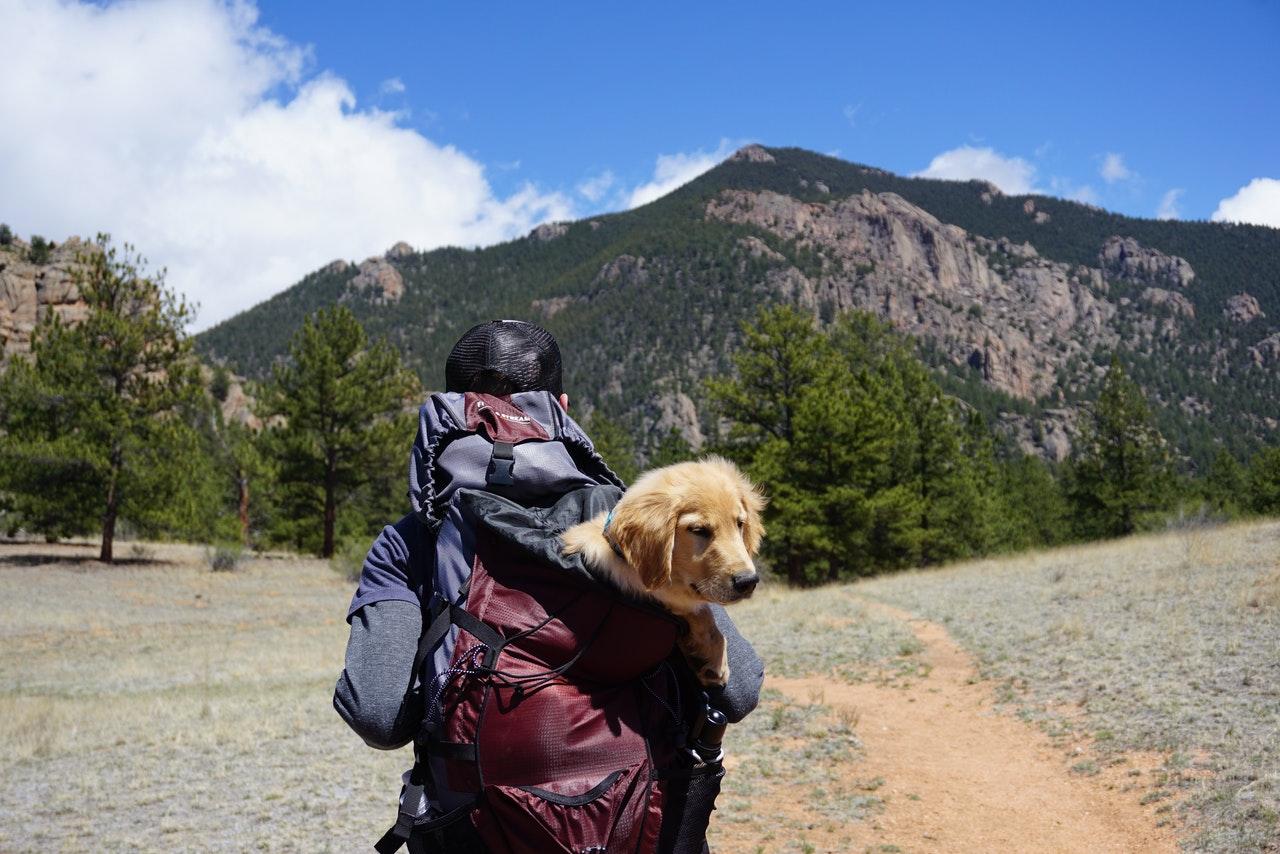 Pet Travel Accessories
